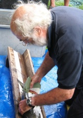Dr Ronald Campbell of Tweed Foundation tagging a salmon