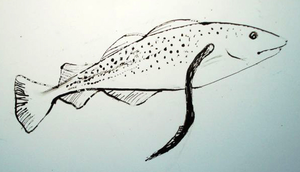 Indicator Species Drawing In The Field